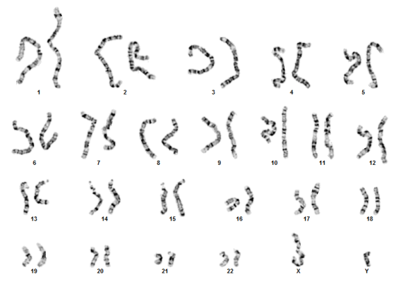 blood chromosome analysis